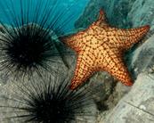 Echinodermes