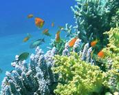 Poissons de récifs